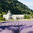 Senanque abbey with lavender field, Provence, France — Stok fotoğraf