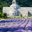 Senanque abbey with lavender field, Provence, France — Stock Photo #9066410