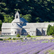 Senanque abbey with lavender field, Provence, France — Foto Stock