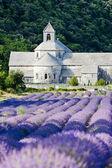Abadia de senanque com campo de lavanda de provence, frança — Foto Stock