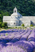 Senanque abbey med lavendel fält, provence, frankrike — Stockfoto