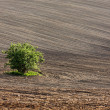 Field with a tree in Southern Moravia, Czech Republic — Stock Photo