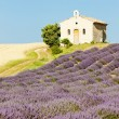 Chapel with lavender and grain fields, Plateau de Valensole, Pro - Zdjęcie stockowe