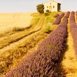 Chapel with lavender and grain fields, Plateau de Valensole, Pro - Foto Stock
