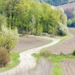 Stock Photo: Spring landscape with fields in Southern Moravia, Czech Republic