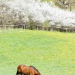 Horse on meadow — Stock Photo #9704168