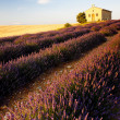 Chapel with lavender field, Plateau de Valensole, Provence, Fran - Foto Stock