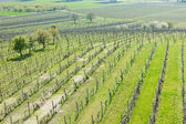 View of vineyards from lookout tower of Kravi hora near Boretice — Stock Photo