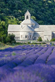Senanque abbey with lavender field, Provence, France — Stock Photo