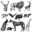 Vector Vintage Animal Set — Stock Vector
