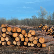 Stock Photo: Firewood store