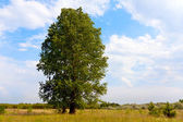 Tree on meadow — Stock fotografie