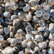 Royalty-Free Stock Photo: Seashells natural bacground