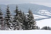 Dağlarda kış sahne — Stok fotoğraf