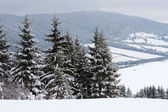 Winter scene in mountains — Stock Photo