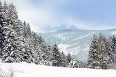 Vinter i bergen — Stockfoto