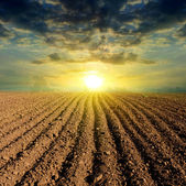 Ploughed field sunset — Stock Photo