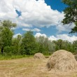 Forest meadow with haystacks — Foto Stock
