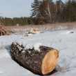 Stock Photo: Log in winter forest