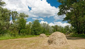 Forest meadow with haystacks — Stock Photo