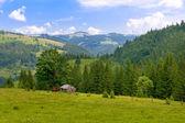 Mountain meadow — Stock Photo
