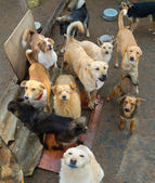 A lot of stray dogs — Stock Photo