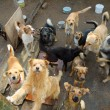 Stock Photo: Lot of stray dogs