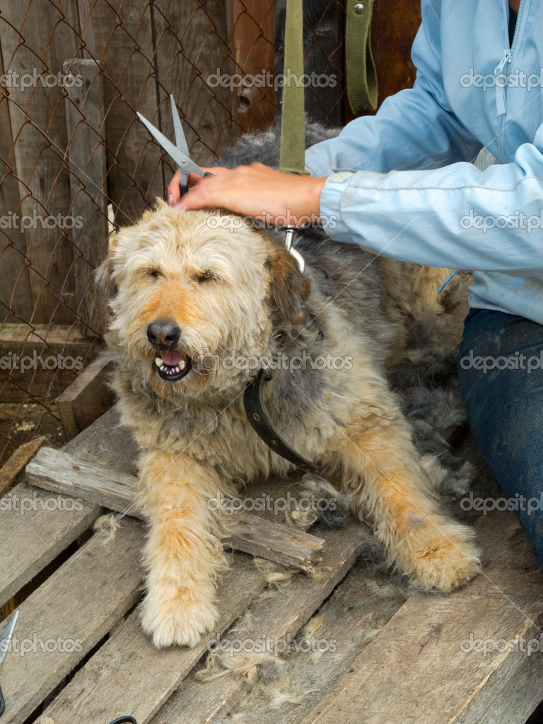 Volunteer cuts stray dog ​​at the shelter — Stock Photo #10727941