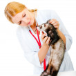 Young veterinarian examines a patient ferret — Stock Photo