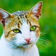 Sweet female cat - Stock Photo