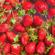 Many fresh organic red strawberries — Stock Photo