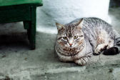 Domestic cat sitting calm outdoor — Stock Photo