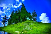 Mountain landscape - fir trees, grass and sky — Stock Photo