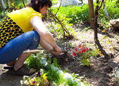 Gardening - one woman cultivating flowers — Stock Photo