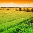 Field of green fresh grass and colorful sky - Stock Photo