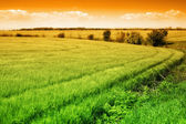 Field of green fresh grass and colorful sky — Stock Photo
