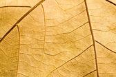 Macro on textured autumn brown leaf — Stock Photo