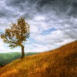 Mountain landscape - isolated tree and autumn grass — Stock Photo