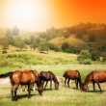 Wild horses on green field and sunny sky — Stock Photo #9981272