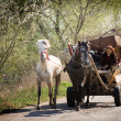 Gypsy carriage on the road - Stock Photo