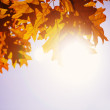 Autumn leaves and sky — Stock Photo