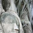 Wat Mahathat Buddha Head - Stock Photo
