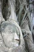 Wat Mahathat Buddha Head — Stock Photo