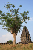 Hindu temple Prambanan — Photo