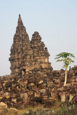 Papaya tree at Hindu temple Prambanan — Stockfoto