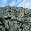 Lichen rocks — Stock Photo