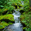 Stream in forest - Stock Photo