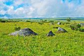 Tundra — Stock Photo