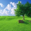 Blue sky and grass - Stock Photo