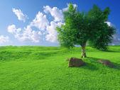 Hierba y cielo azul — Foto de Stock